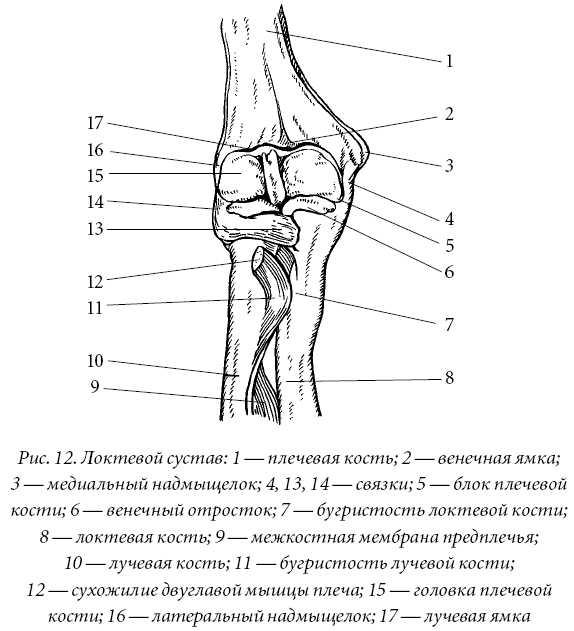 Крупные суставы лечение суставов ленинградская область